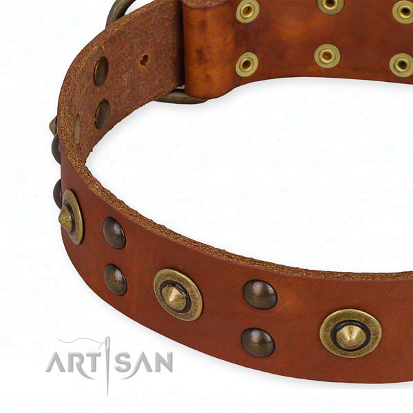 Unique Collars for Dogs