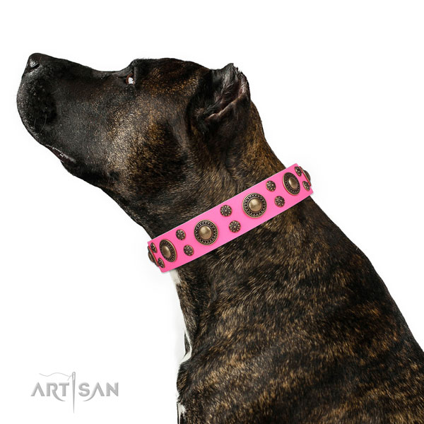 Unusual Dog Collar
