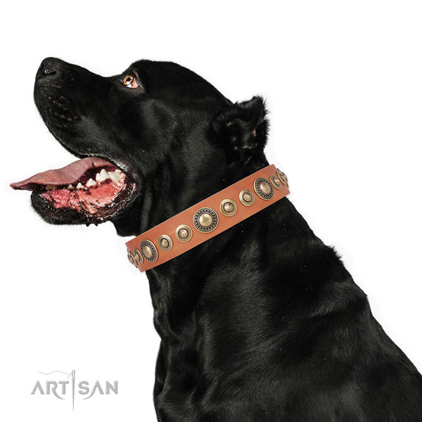 Walking Dog Collar