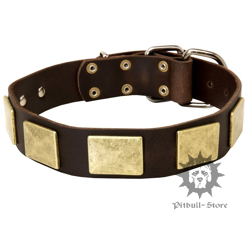 How Big Are Large Dog Collars