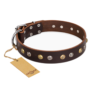 """Rare Flower"" FDT Artisan Brown Dog Collar for Staffy Walks"