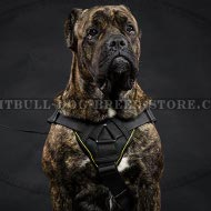Dog Harness for Cane Corso of Nylon with Padded Chest Plate