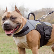 Vest Harness for Pitbull Support and Warming, Dog Jacket Harness