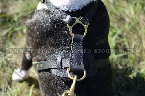 Best Dog Harness for Pitbull