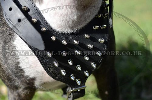 Dog Harness Spiked