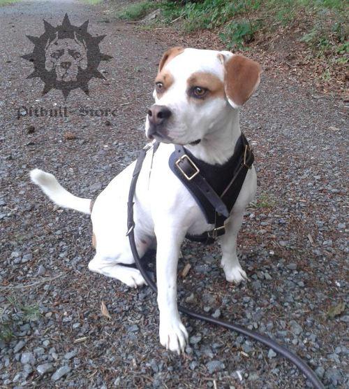 Blue Dog Training Behavior Madison Wi