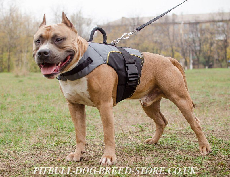 Vest Harness for Pitbull Support and Warming, Nylon Jacket