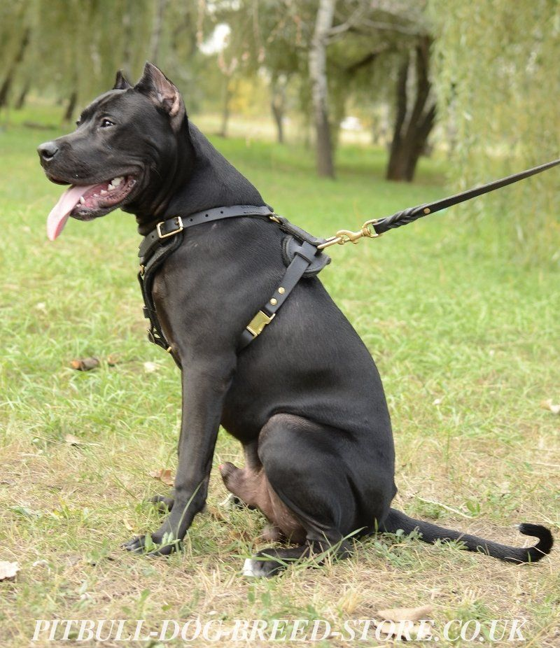 Best Harness For Strong Dogs That Pull