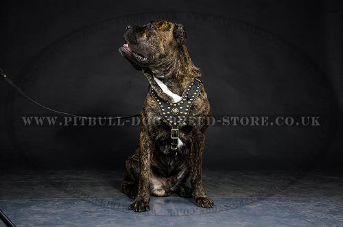 Cane Corso Harness UK