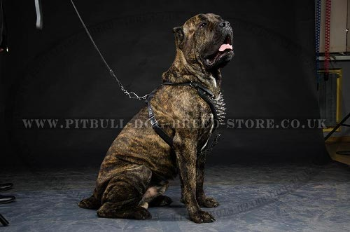 Cane Corso Leather Harness