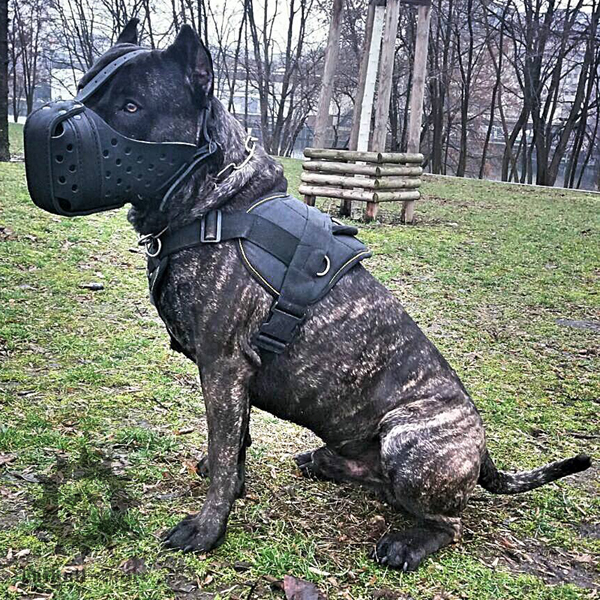 Sport Dog Harness and Muzzle