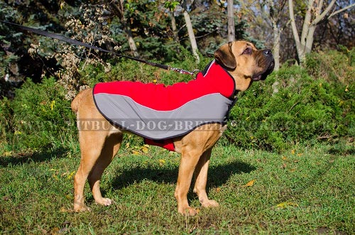 Dog Coats for Cane Corso