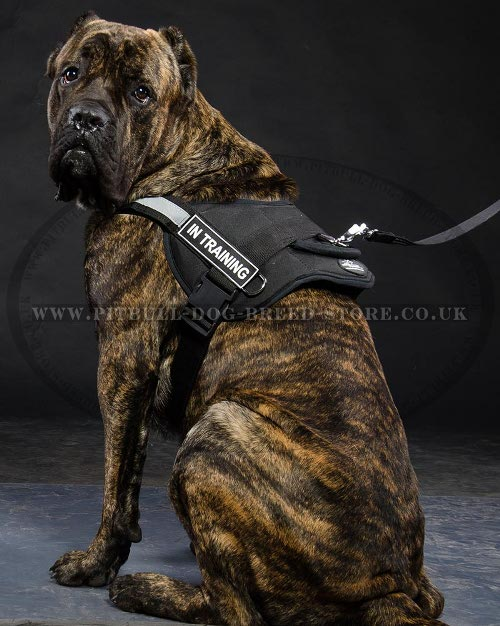Dog Harness for Cane Corso