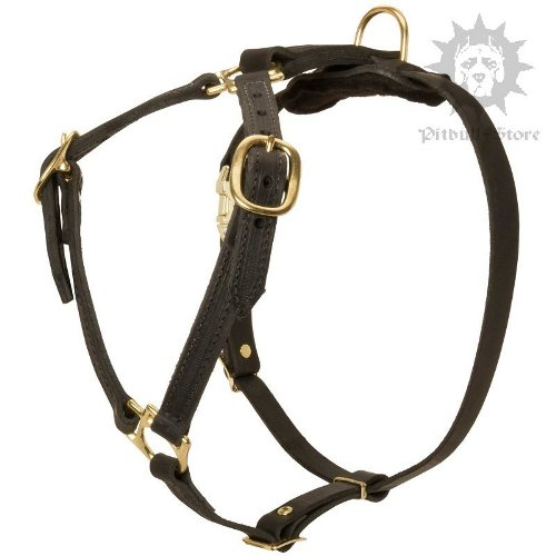 Best Harness for Cane Corso