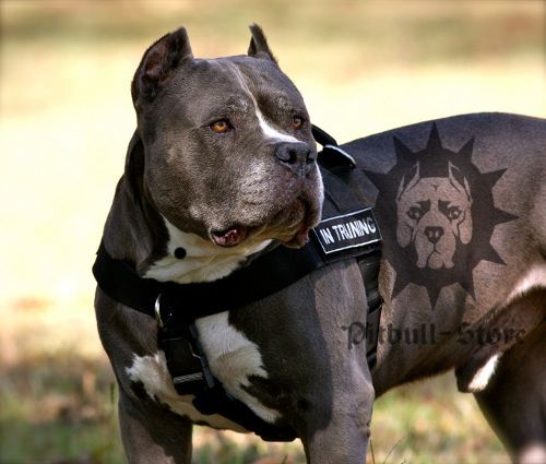Bully Dog Rescue Uk