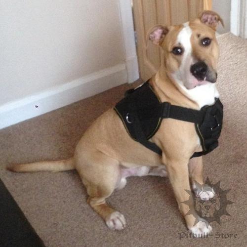 Harness For Dog Uk Lancashire