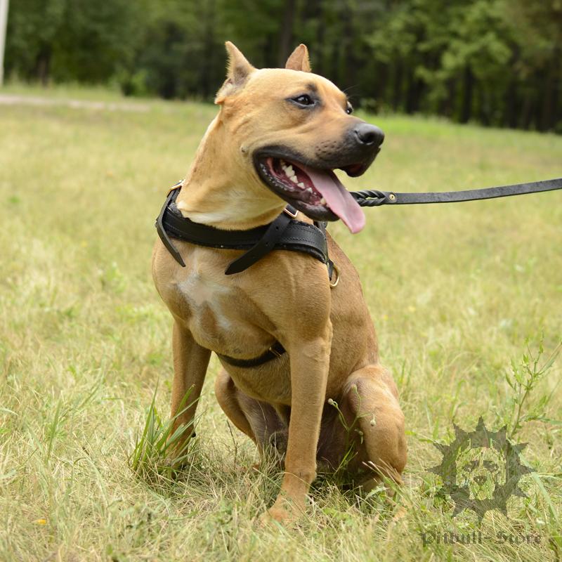 Leather Dog Harness Uk Dog Tracking Harness 163 44 30