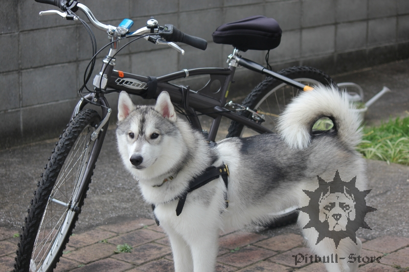Dog and a Bike