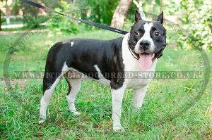 Dog Leash for Pitbull