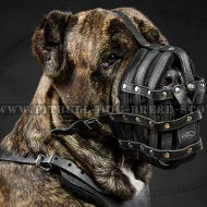 Dog Muzzle for Cane Corso of Leather for Everyday Use
