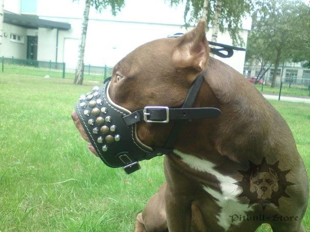 dog muzzles for sale