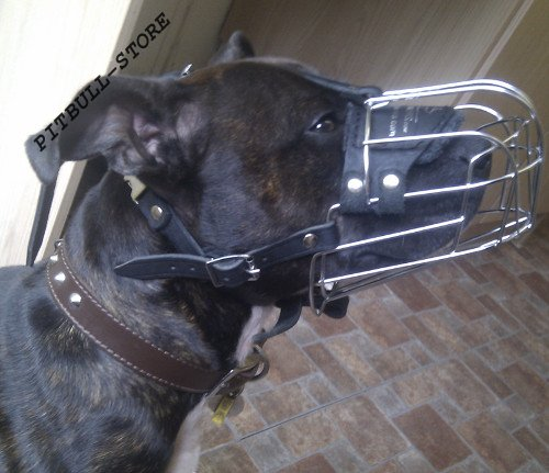 Staffy Muzzle UK