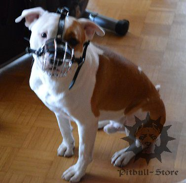 Dog Muzzle for Sale