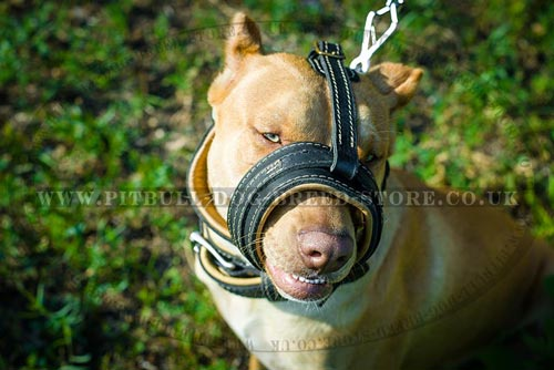 Anti-barking Dog Muzzle