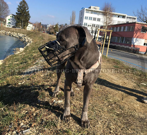 Best Muzzle for Cane Corso