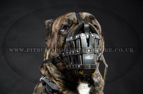 Cane Corso Leather Muzzle