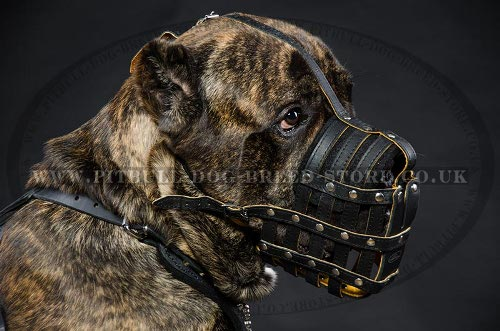 Dog Muzzle for Cane Corso