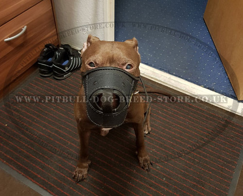 Dog Muzzle for Pitbull for Sale