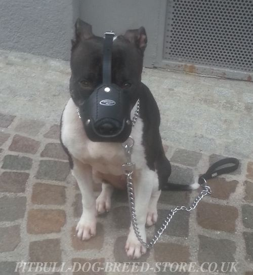Leather Dog Muzzle for Sale UK