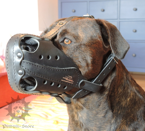 Muzzle