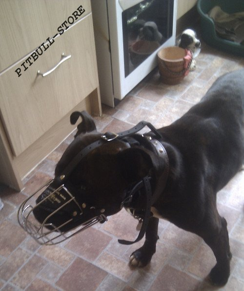 Staffy Dog Cage Muzzle for Sale