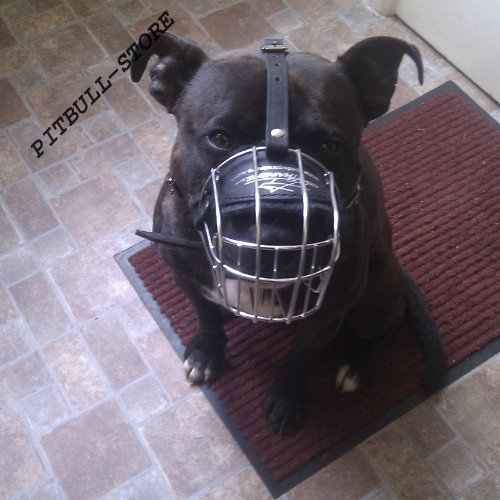 Wire Basket Dog Muzzle UK for Srafford