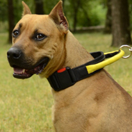 Best Dog Collar for Amstaff of Nylon with Handle