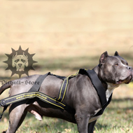 Weight Pulling Pit Bull Dog Harness, UK