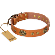 """Dandy Pet"" FDT Artisan Dog Studded Collar in Tan for Staffies"
