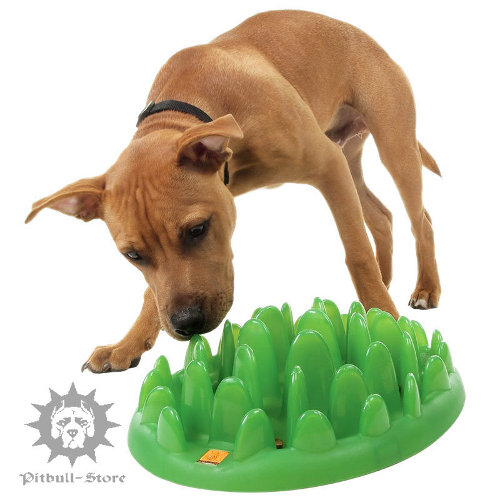 Dog Feeder Water Bowl