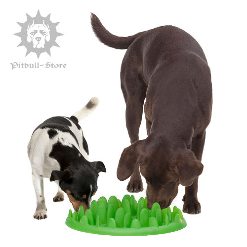 Interactive Dog Feeder for Staffy Puppy