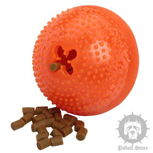 Bento Ball for Dogs