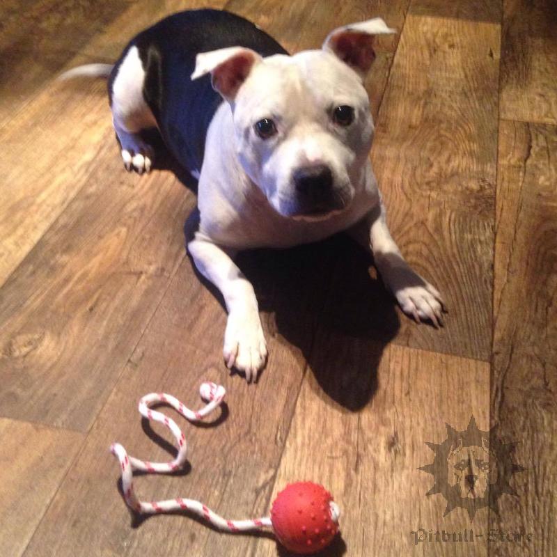 Best Dog Bones For Aggressive Chewers Uk