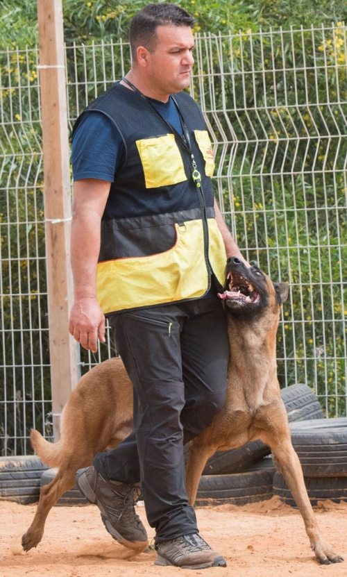 Dog Training Vest for Sale
