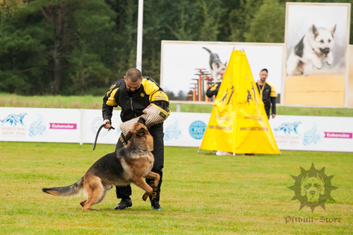 IGP Working Dog