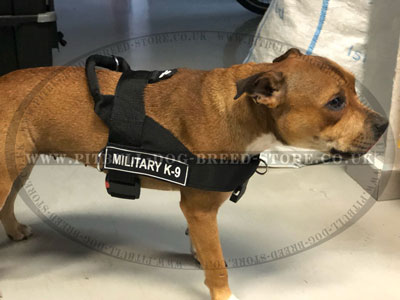 Bestseller! ID Dog Training Harness for Staffordshire