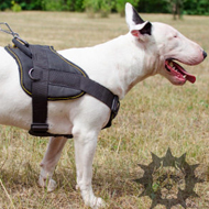Dog Training Harness for Bull Terrier, Nylon, Padded Chest Plate