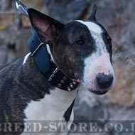 """Gladiator"" Extra Large Dog Collar for Bull Terrier"