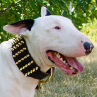 Extra Wide Leather Dog Collar for Bull Terrier with Brass Spikes