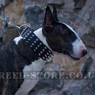 Extra Wide Dog Collar with Interchanging Spikes and Studs